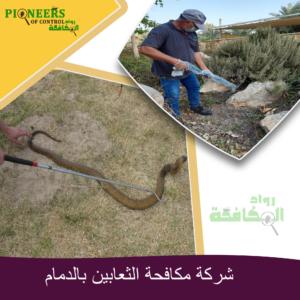 شركة مكافحة الثعابين بالدمام
